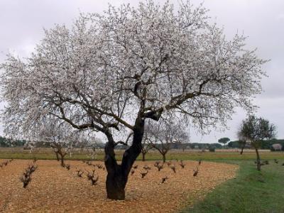 Paisajes: El árbol que ya tiene flores...