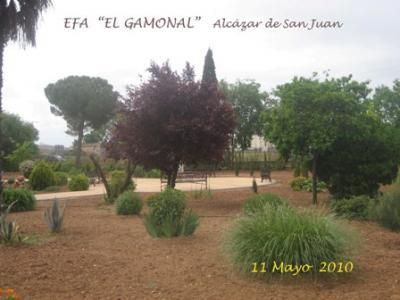 """EFA """"El Gamonal"""""""